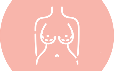 What Determines Breast Shape?